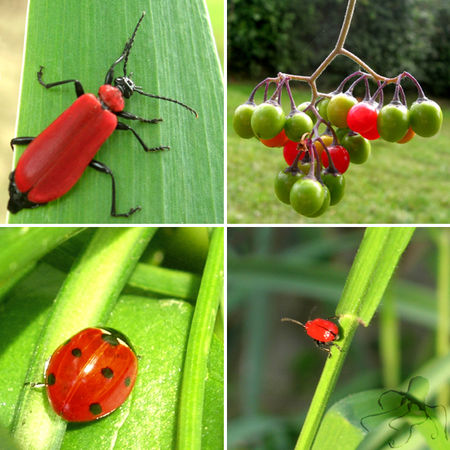 insectes_rouges