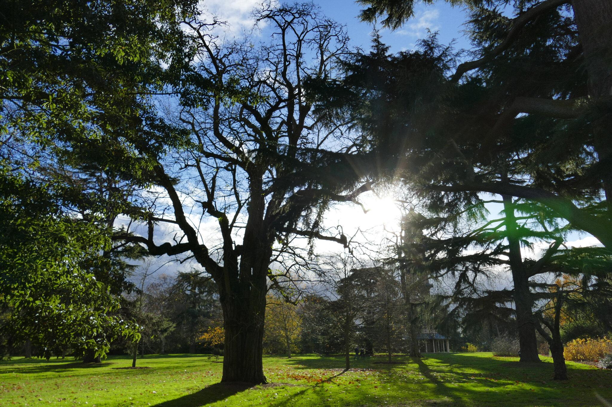 2 décembre 2018 - Kew Gardens