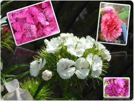 Fleurs 2009-2010 (34)