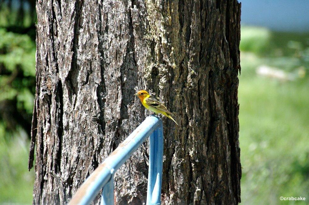 birding washington state