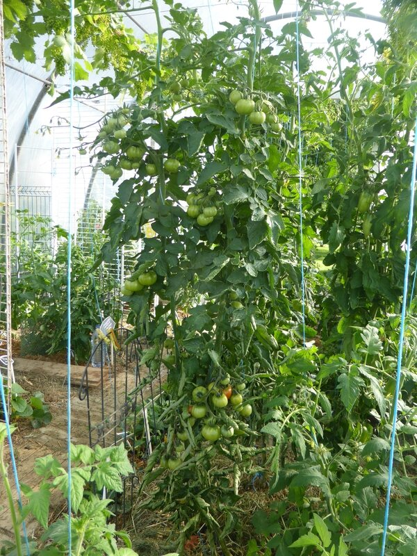 21-tomates (6)