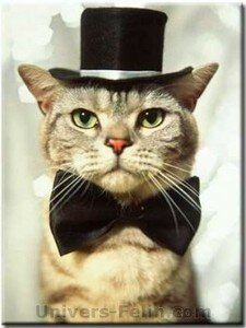 big_cat_with_hat