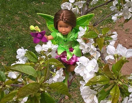 7 avril 2018 Sofia et le petit cerisier 04