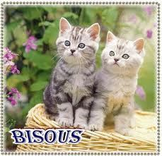 bisous chats