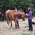 équitation d'extérieur - parcours en terrain varié (34)