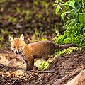 2014-05-30 LUX-1138