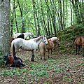balade equestre gastronomique à La Lucerne d'Outremer (10)