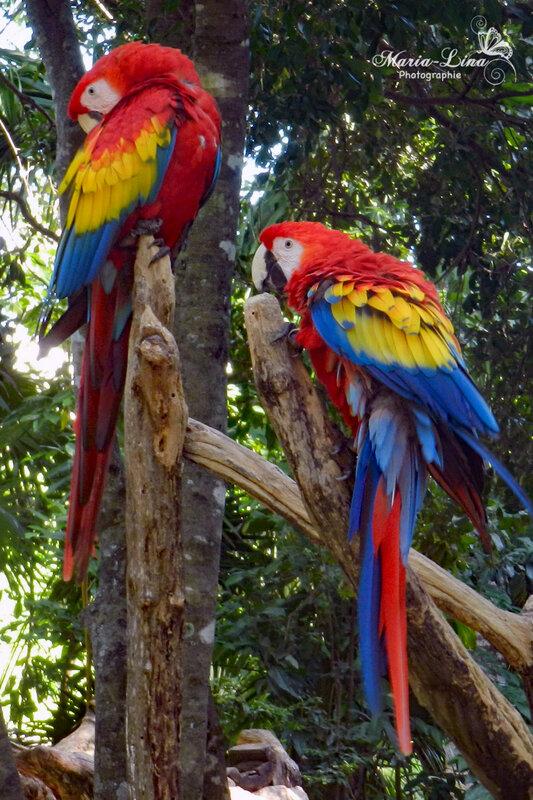 perroquet3a