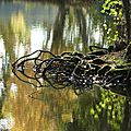 reflets racines1