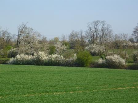Arbustes en fleur, c'est le printemps