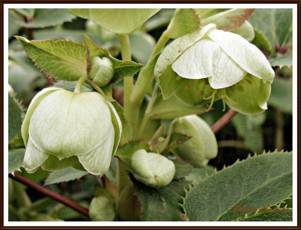 fleurs vertes (10)