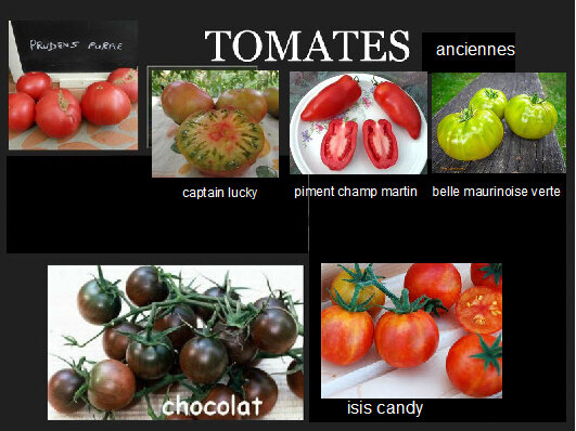 tomates anciennes montage
