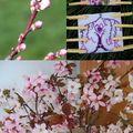 Dpm # 11 : soleil, jardin, détente, tout un programme !!!!