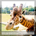 Zoo de Pont Scorff - Océanopolis