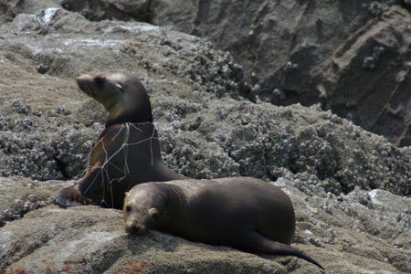Seals-in-monofiliment