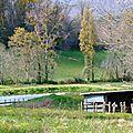 Ecuras, Charente Limousine.