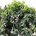 Des pommes , des poires et des scoubidous, ous, ous