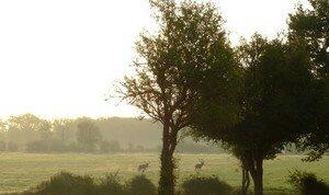 2006_0930Blois_St_Av_Chambord0267