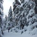 Neige sur l'Audibergue