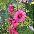 Windows-Live-Writer/Jardin_10232/DSCN0721_thumb