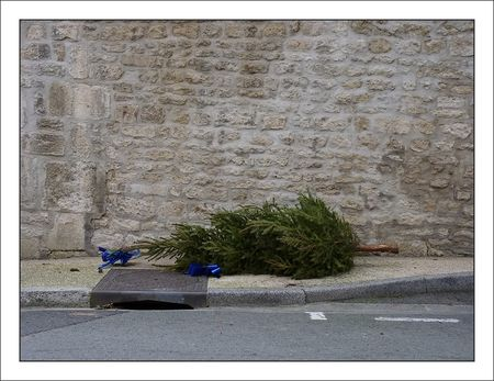 sapin_trottoir