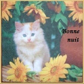 b_n_chat_tournePaint_BPatFLy