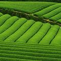 La petite boutique de thé d'uji ...