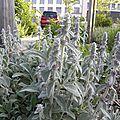 fleurs-de-breche (75)