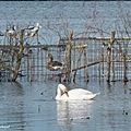 Balade au Lac 211218
