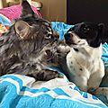 Trompette-Ippolyte et le chat