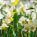 image-fleur6