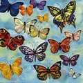 Papillons papillonants...