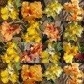 Iris jaunes ou oranges