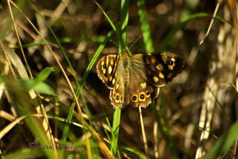 20161003_nature_papillon_03