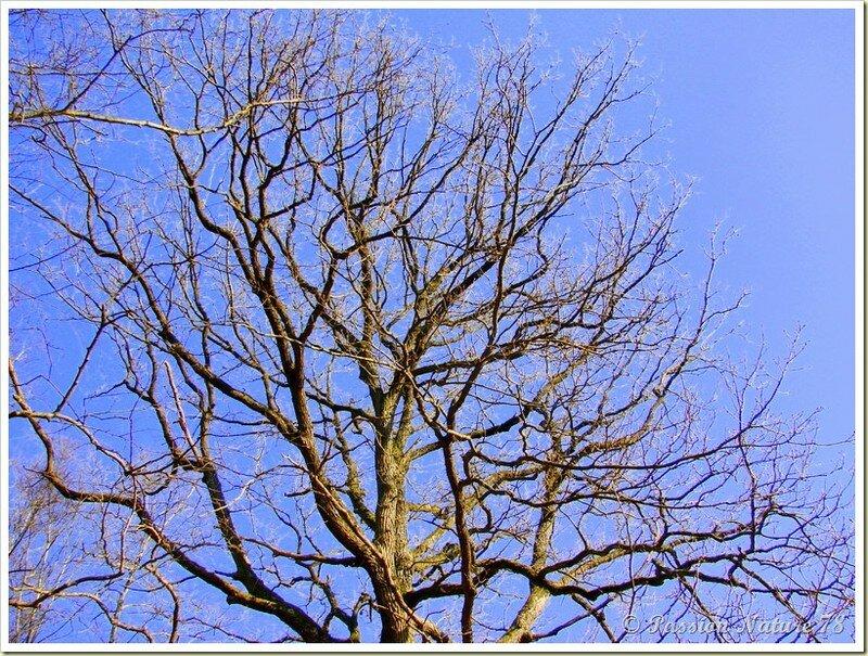 La forêt de Rambouillet vue sous un autre angle (23)