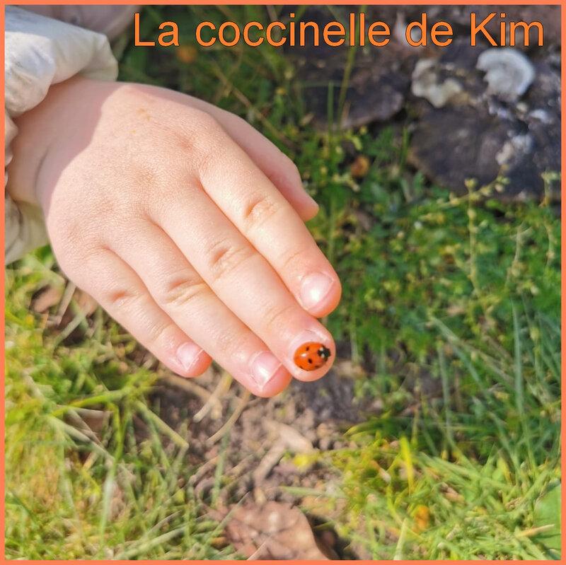 kim coccinelle