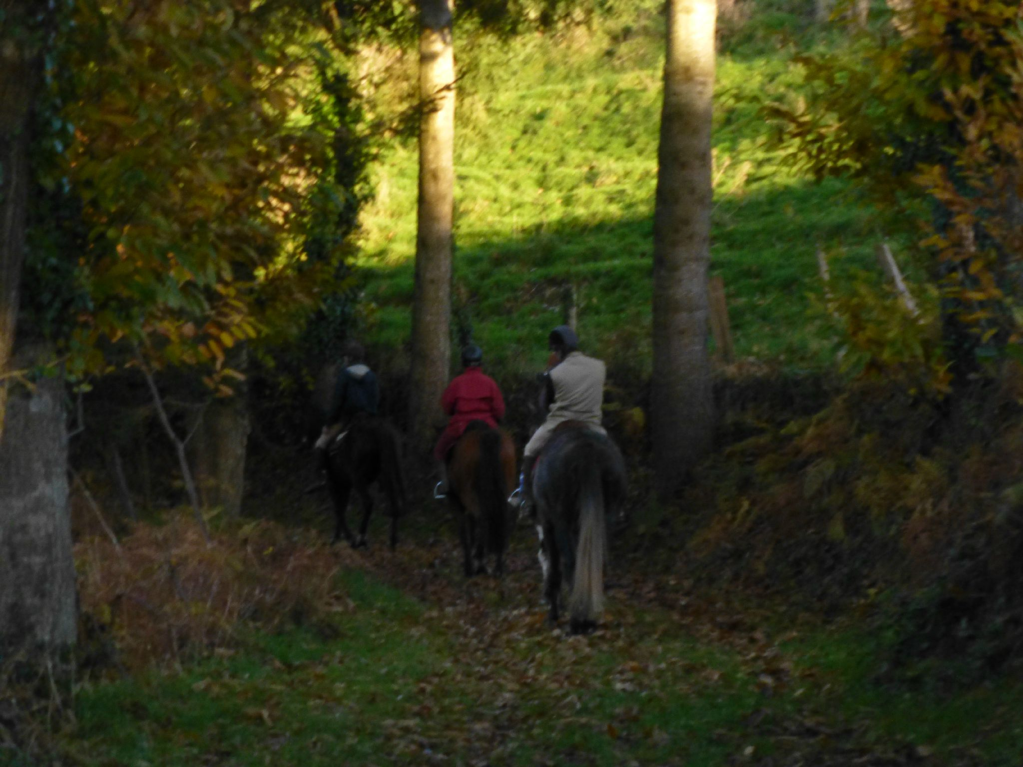 balade liberté - Mesnil Ozenne à cheval (38)