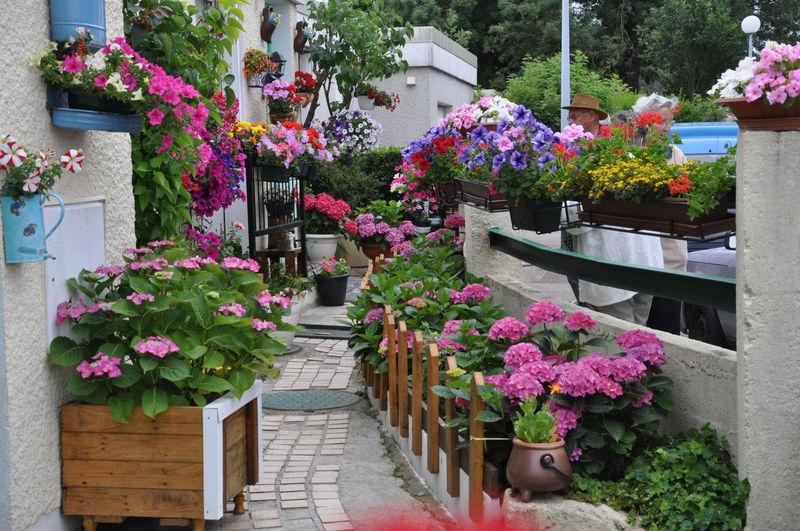 jardins fleuris 0320033