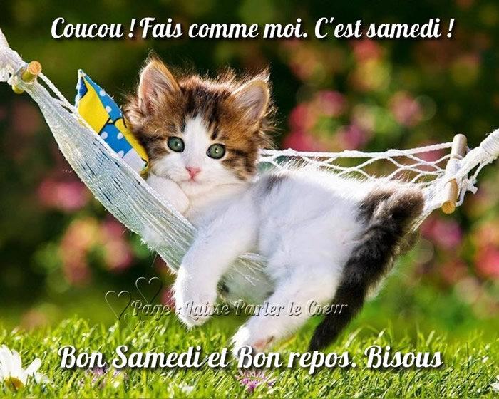6 b s chat dans hamac BPat19