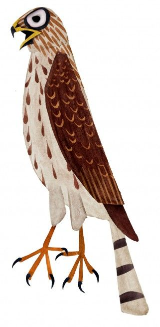 Coopers_Hawk_321x655_custom