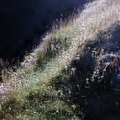 Herbes sous ombres & lumières