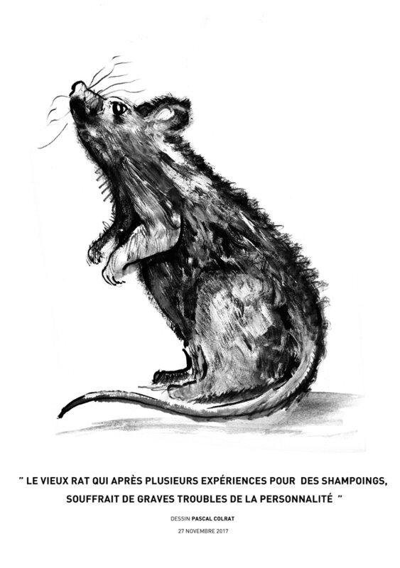 __le_vieux_rat_qui_apre_s_plusieurs_expe_riences_pour__des_shampoings___Souffrait_de_graves_troubles_de_la_personnalite________