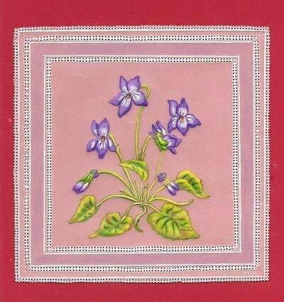 violettes en perga liners B et A 08-2010