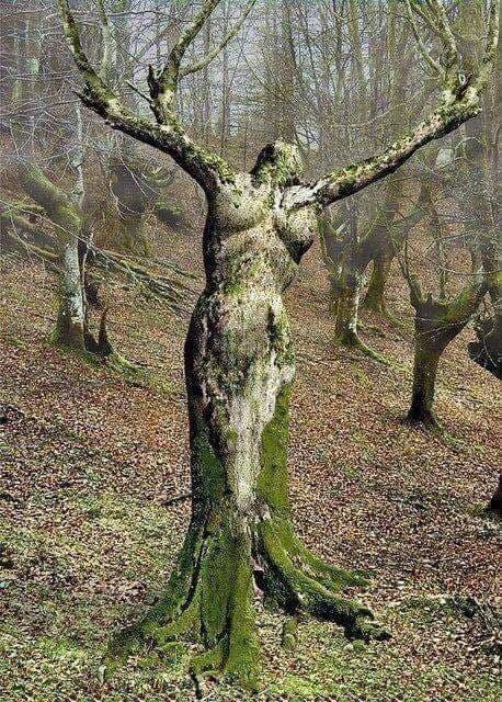Evy°208: Mère Nature