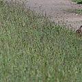 Lapins et lièvres en action