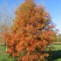 automne041