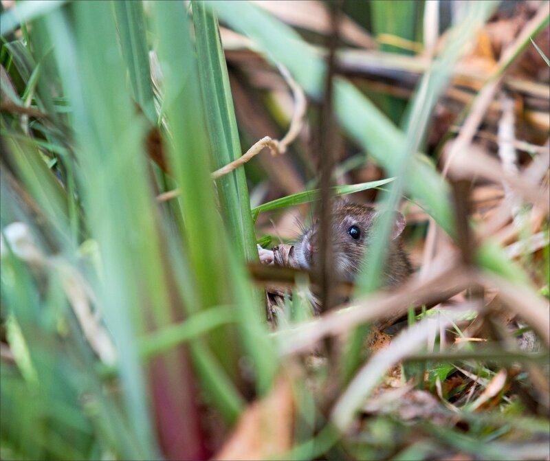 ville rat cache 2 231015