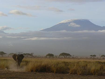 elephant_ambolesi