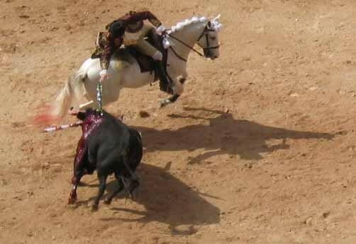 Corrida___cheval_03
