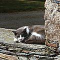 20140920 chat en sieste Grandjouan